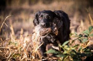 Otter Creek Farm Dog